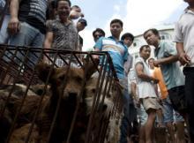 """China inaugura """"festival anual de carne de perro"""" pese al covid-19"""