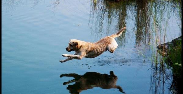 ccb4e23c8aa216f1e96d31ab209c036b - El perro que caminó sobre las aguas