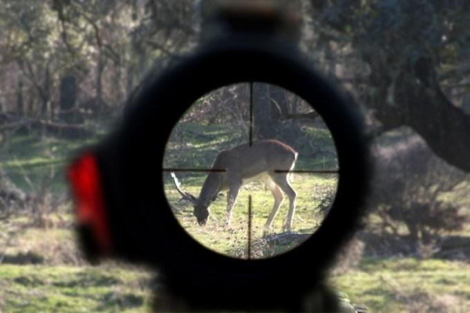Letizia Ortiz nos cuesta 70.000 euros a todos por su pasión por la caza
