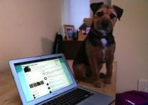 4bd6883f84951e6d2d1f98d201ae7ada - El perro que se alimenta por Twitter @FeedToby
