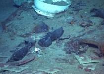 790d0007c4ea0f8beb5c4b5565a1d2d8 - Impacto mundial: fotos de restos humanos en el Titanic