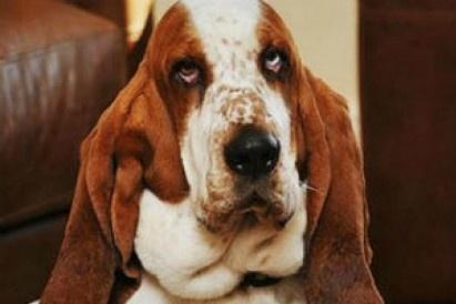 b5081aa54ad470ff4039ef00a5cbf9d3 - El perro George salvó su vida llamando a emergencias