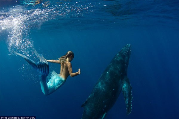 sirena1 - Sirena australiana nada junto a las ballenas