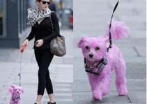 2500adbea25740e025bcce2dce1688ed - Emma Watson con perro rosa: la acusan de maltrato animal