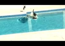 19b964e9a90a99cb5d565f422cac5a42 - Gato escapa surfeando de un perro que lo persigue