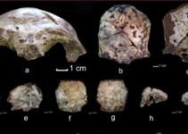 77b7133243f114d6fd9cc234309abdfc - Hallazgo de cráneo de 63.000 años cambia teoría sobre aparición del hombre moderno
