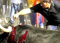 7d949e9d1dc0ed3fa5deb29f17078d09 - Antitaurinos lanceados en lugar del animal en la sangrienta fiesta del Toro de la Vega