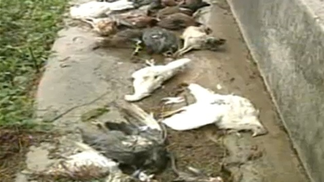 67d1eae3e9598f9411cacd63103dd8a9 - Supuesto chupacabras en Puerto Rico aterroriza a una familia