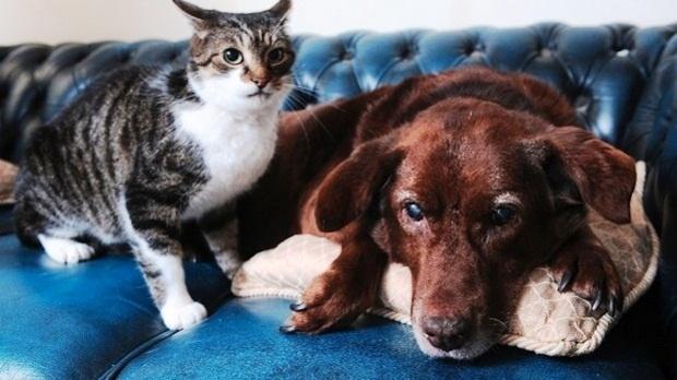 58ecdbe2c2e962e11df1ffdb91c5d803 - Amigos inseparables: un gato se convirtió en el protector de un perro ciego