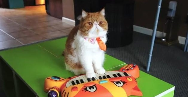 089b3120f411b8fddd2ef2414d02d415 - #Video 8 razones para querer al gato Pancake