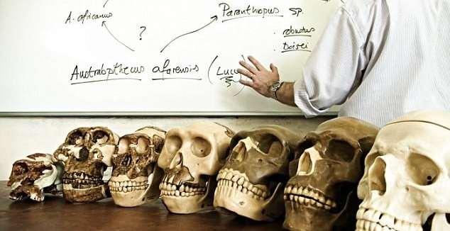 d8b3473baaa346e3571b5bc4f43b0968 - Los antepasados humanos más tempranos fueron simios acuáticos