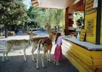 85b8411586b3a7072d48b22421d73033 - La fotógrafa Robin Schwartz muestra la conexión de su hija con animales de todo tipo