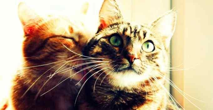 06d2f4b812c24d50f3a0b68d286c30f6 - 8 destinos perfectos para cualquier amante de los gatos