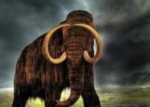 d106ef89c3a6a3f8bd2ba8064076995d - Más cerca de clonar mamuts a partir de elefantes