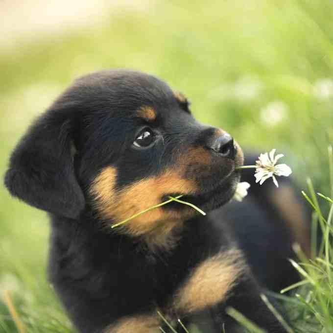 c8ed3ad4441892a8a51973045a5a6b79 - Estafa en una venta de perros por internet