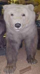 groalr 162x300 - Animales Híbridos – Cruces de animales más exóticos