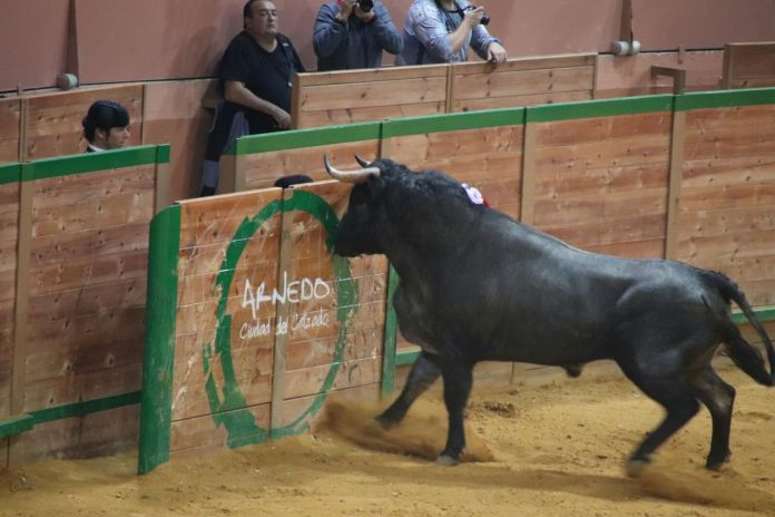 Pajarillo, el sexto de la tarde en Arnedo