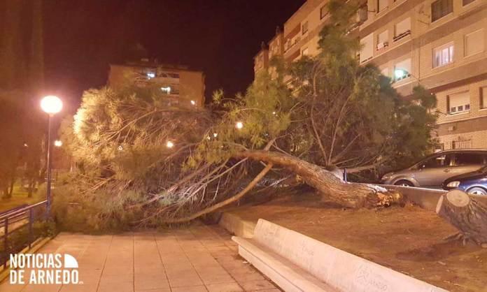 Cae un árbol en el Barrio de la Paz