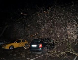 Árbol caído sobre coches en el aparcamiento de La Vega, en Cangas del Narcea