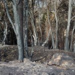 El Principado prepara un plan de lucha contra los incendios forestales en el Suroccidente