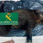 Dos investigados por abatir jabalíes en el Parque Natural de Fuentes del Narcea, Degaña e Ibias