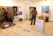 exposición osos Tineo