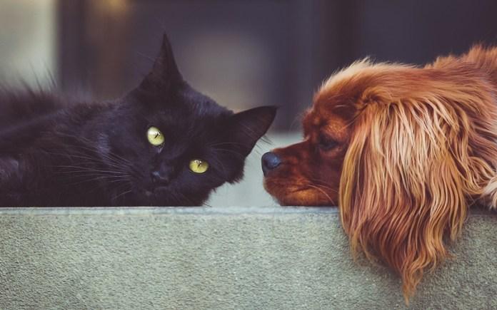Seguros de mascotas