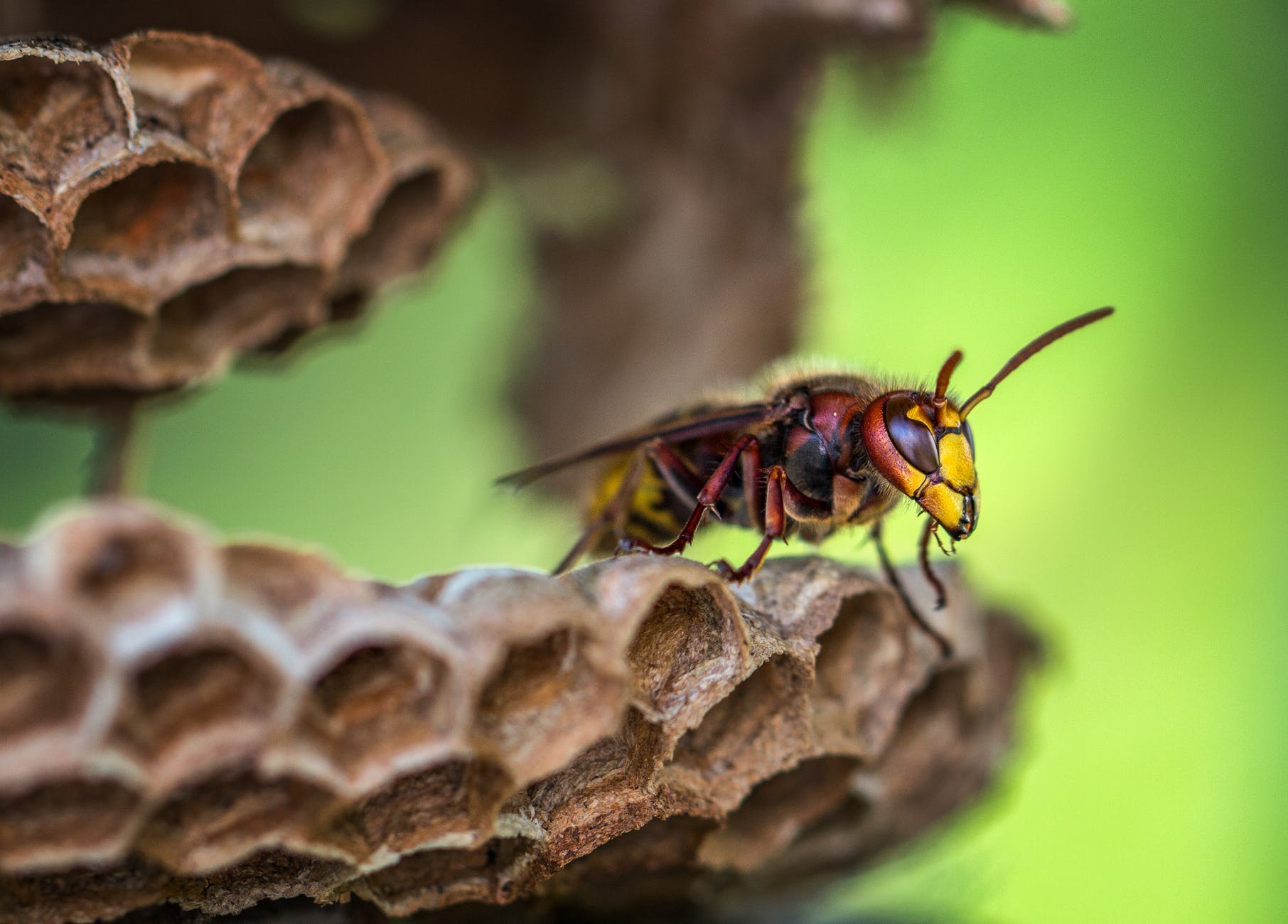 macro lens photography of yellow and red bee