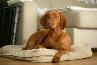 marittabrigitta-400x266 Noticias de perros - Inicio