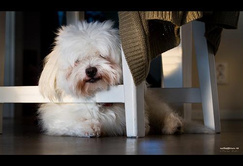 Foto cortesía de: Marco Natri http://www.flickr.com/photos/markonatri/