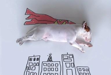 jimmy-choo-bull-terrier-illustrations-rafael-mantesso-2-383x260 Noticias de perros - Inicio