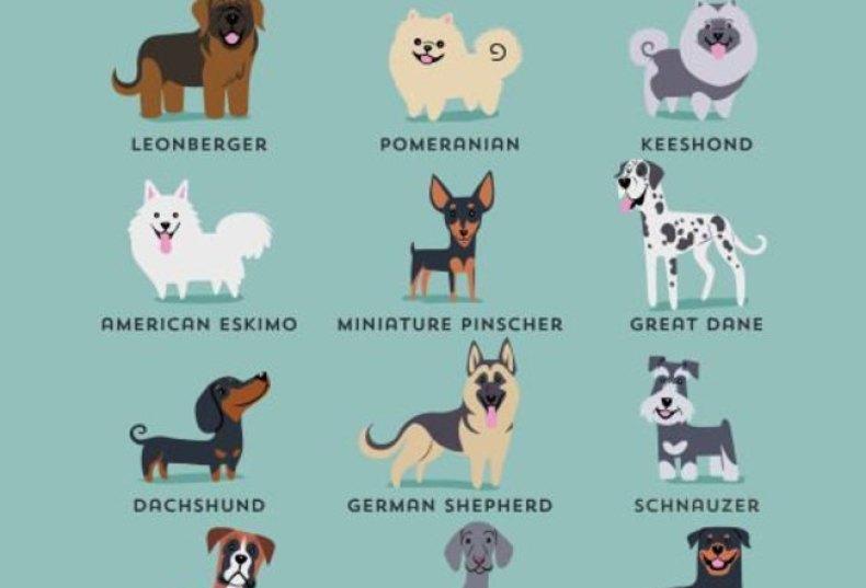 perrosalemanes-790x537 Noticias de perros - Inicio