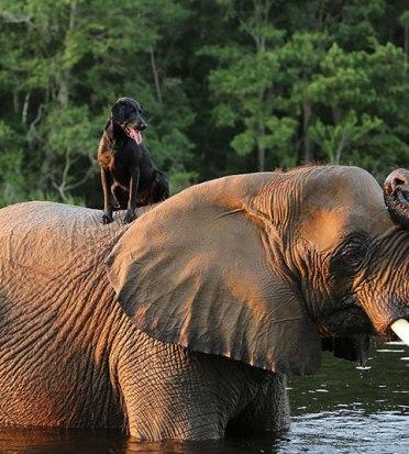 elefante y perro