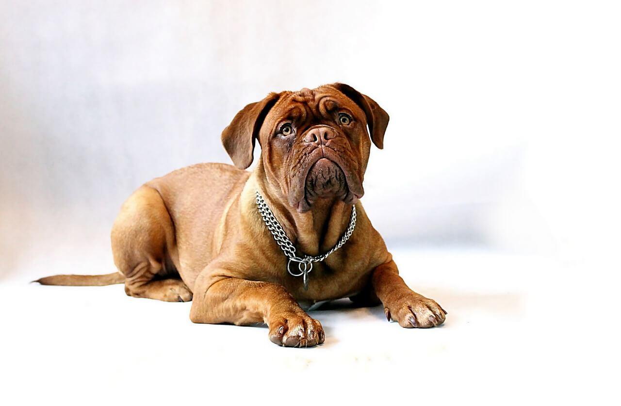 dog-734688_1280 Noticias de perros - Inicio