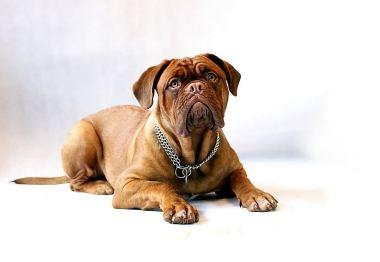 dog-734688_1280-380x262 Noticias de perros - Inicio