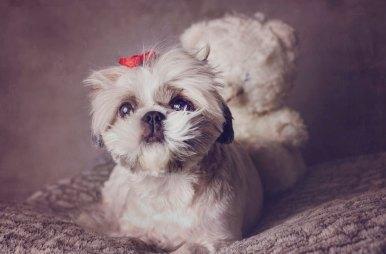 DSC_8596-2-386x254 Noticias de perros - Inicio