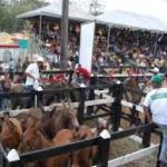 Feria del caballo en Robleda 2015
