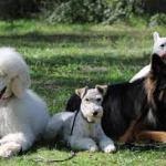 Quedada Canina en Salamanca 2016