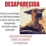 URGENTE – Donos procuram informações sobre a cachorra LUNA, desaparecida em São Pedro da Aldeia