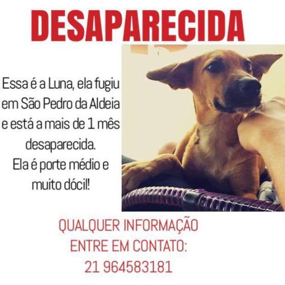 Cão desaparecido em São Pedro da Aldeia