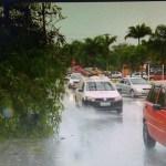 BÚZIOS – Árvore cai em Búzios e deixa trecho de avenida em meia pista