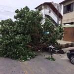 CABO FRIO – Idosa argentina é atingida por galho de árvore após fortes rajadas de vento em Cabo Frio