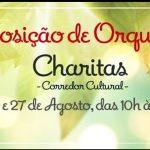 CABO FRIO – CHARITAS RECEBE II EXPOSIÇÃO DE ORQUÍDEAS NO PRÓXIMO FIM SE SEMANA