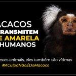 ARARUAMA – Dois micos são encontrados mortos com sinais de agressão em Araruama