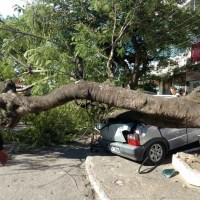 REGIÃO DOS LAGOS – Árvore cai em cima de carro e dois pedestres em Araruama