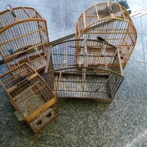 SÃO PEDRO DA ALDEIA – Pássaros silvestres são resgatados em São Pedro da Aldeia