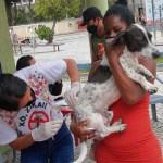 Cabo Frio imuniza 9.446 cães e gatos durante campanha no fim de semana