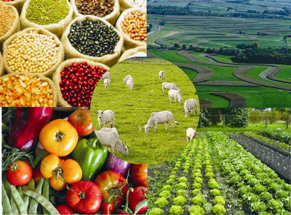 Resultado de imagem para agronegocio