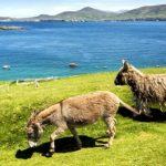 Isla de Irlanda en busca de personas que la habiten y la cuiden