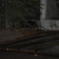 Un muerto a balazos en la colonia LOS OLIVOS está noche en La Paz